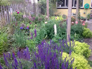 garden landscaping planting for cottage garden in Leeds Yorkshire