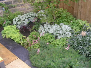 garden landscaping planting with euphorbia and brunnera and slate edging