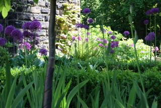 garden landscapeing in headingley leeds with allium and ferns