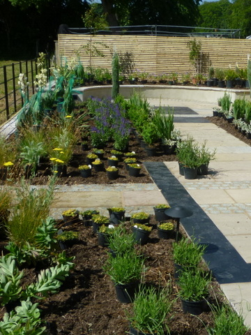 Plants laid out for planting at a landscaped North Yorkshire garden, yellow achillea flower