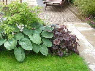 Garden landscaping planting hosta heuchera acer by paperbark garden design in Yorkshire