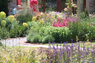 cottage garden landscape planting in Yorkshire by Paperbark garden design curved path