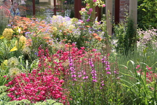 cottage garden landscape planting in Yorkshire by Paperbark garden design with euphorbia