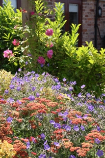 cottage garden landscape planting in Yorkshire by Paperbark garden design with sedum