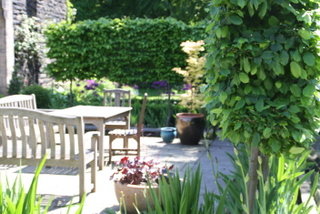 garden landscaping with outdoor dining and pleached trees